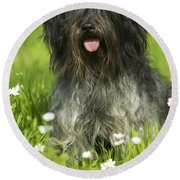 Schapendoes, Or Dutch Sheepdog Round Beach Towel