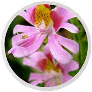 Schizanthus Named Angel Wings Round Beach Towel