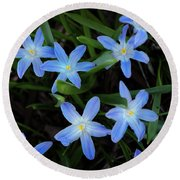 Scilla Flowers In The Morning Round Beach Towel