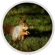Sciurus Vulgaris In Evening Light Round Beach Towel