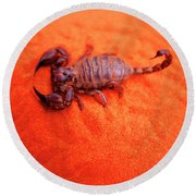 Scorpion Red Sand Sting Insect Round Beach Towel