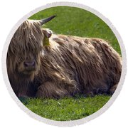 Scottish Highland Cattle 3                          Round Beach Towel