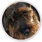 Scottish Terrier Closeup Round Beach Towel