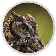 Screech Owl 1 Round Beach Towel