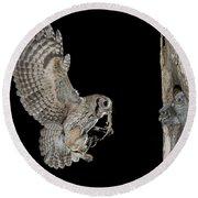 Screech Owl Feeding Owlets Round Beach Towel