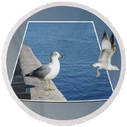 Sea Gull Away Out Of Bounds Round Beach Towel
