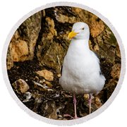 Sea Gull Round Beach Towel