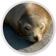 Sea Lion-00178 Round Beach Towel