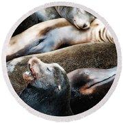 Sea Lion Dreams Round Beach Towel