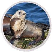 Sea Lion Pup Round Beach Towel
