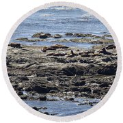 Sea Lion Resort Round Beach Towel