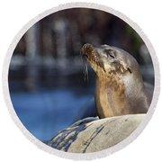 Sea Lion Resting Round Beach Towel