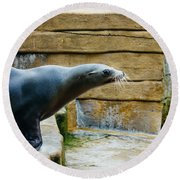 Sea Lion Side View Round Beach Towel