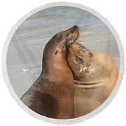 Sea Lions In Love Round Beach Towel