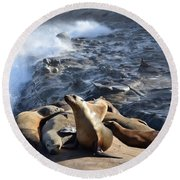 Sea Lions Seek Shelter Round Beach Towel