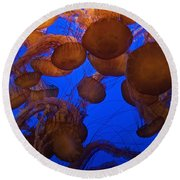 Sea Nettle Jellyfish Round Beach Towel