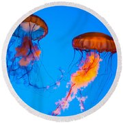 Sea Nettles Round Beach Towel by Anthony Sacco