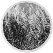 Sea Oats In The Glades Round Beach Towel