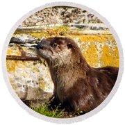 Sea Otter Round Beach Towel