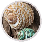 Sea Shells With Urchin  Round Beach Towel