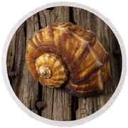 Sea Snail Shell On Old Wood Round Beach Towel