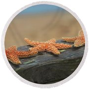 Sea Star Trio Round Beach Towel