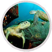 Sea Turtle Oil On Canvas Round Beach Towel