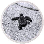 Sea Turtle Round Beach Towel by Sebastian Musial