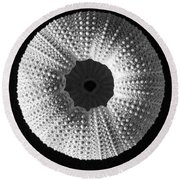 Sea Urchin In Black And White Round Beach Towel