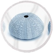 Sea Urchins Three In Blues Round Beach Towel
