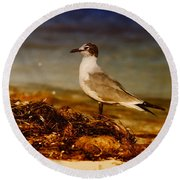 Seagull At The Keys Round Beach Towel