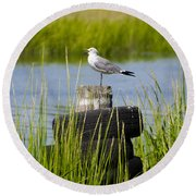 Seagull At Weeks Landing Round Beach Towel