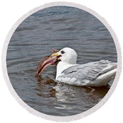 Seagull Eating Huge Fish In Water Art Prints Round Beach Towel