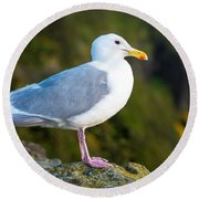 Seagull Heceta Head - Oregon Round Beach Towel