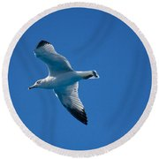 Seagull In The Blue Sky Round Beach Towel