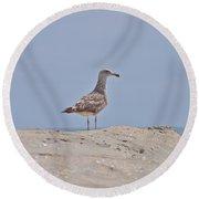 Seagull N Sand  Round Beach Towel