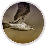 Seagull Oil Round Beach Towel by Deborah Benoit