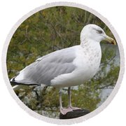 Seagull Outlook Round Beach Towel
