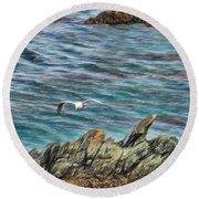 Seagull Over Rocks Round Beach Towel