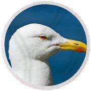 Seagull Portrait Round Beach Towel