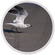 Seagull Preparing To Fly Round Beach Towel