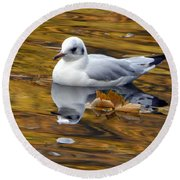 Seagull Resting Among Fall Leaves Round Beach Towel