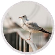 Seagull Standing On Rail Round Beach Towel