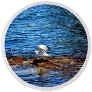 Seagull Wings Lifted Round Beach Towel