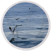 Seagulls At Malaga Sea - Port Of Malaga - Andaluzia - Spain Round Beach Towel