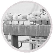 Seagulls In A Row Round Beach Towel