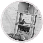 Seal Hammock Black And White Round Beach Towel