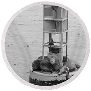 Seal Nap Time Black And White Round Beach Towel
