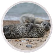 Seal Pup On Beach Round Beach Towel