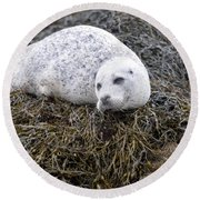 Seal Resting In Dunvegan Loch Round Beach Towel